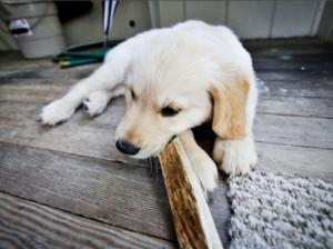 Рога для собак щенков