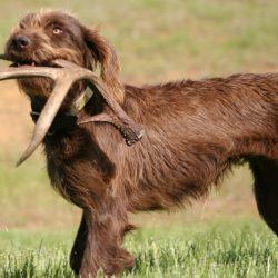 Рога для собак от GAVTORG