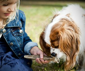Рога для собак